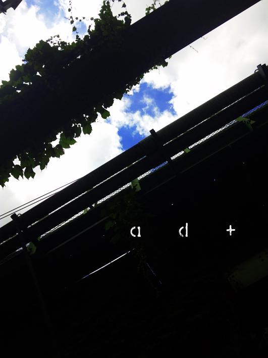 DVC00009.jpg